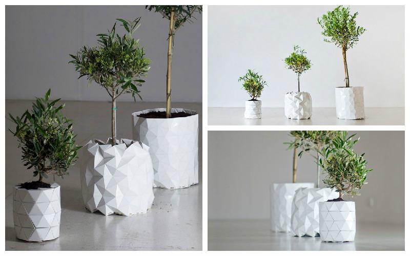 blog1-growth-plant-pot